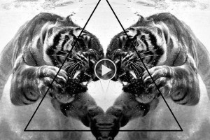 Playlist-23