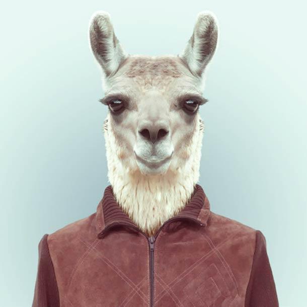 Zoo-Portraits-Yago-Partal-13