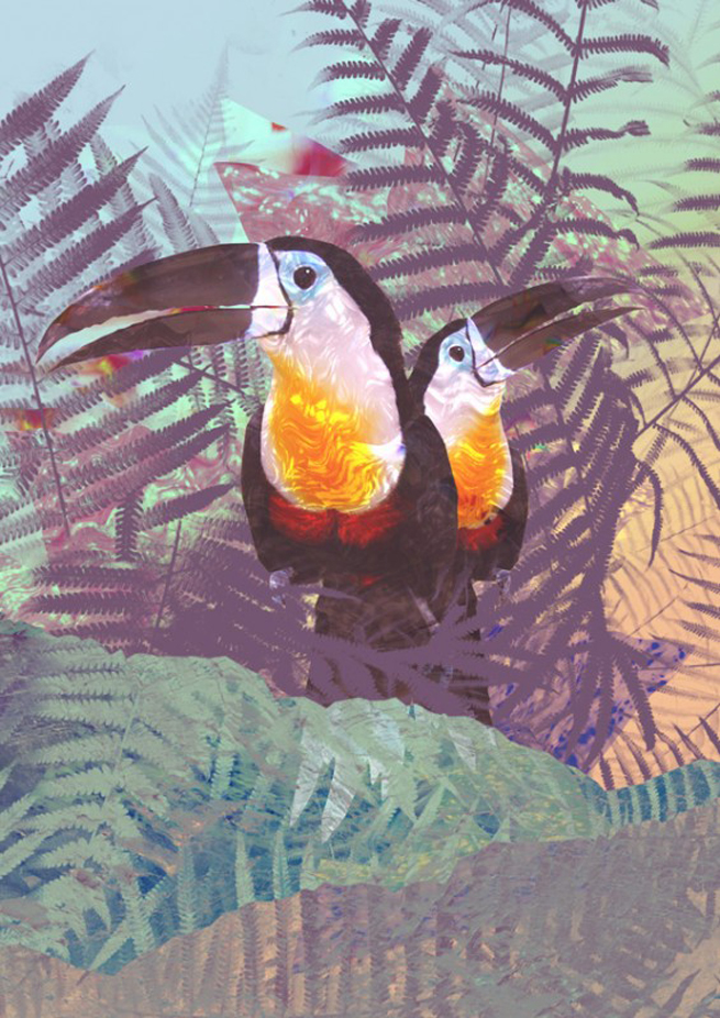 drew-turner-art-toucan1-565x799